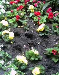 stadtgarten-beet-gerupft2.jpg